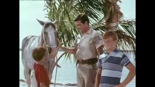 Flipper - Staffel 2, Folge 12 - Flipper und das Zirkuspferd