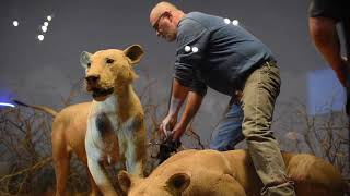 Download Video Lions of Tsavo MP3 3GP MP4
