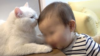 The baby who loves cats and my cat.
