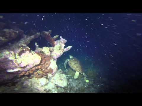 Night Diving on Molasses Reef in Key Largo