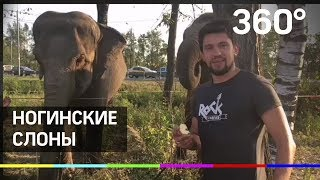 Слоны гуляют по Ногинску!