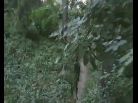 Ботанічний сад ім. М.М. Гришка (part 2 of 2)