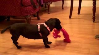 Rosie At Play D