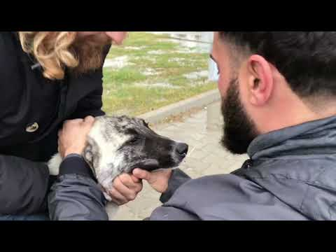 Fishing Hook Stuck In Dogs Nose