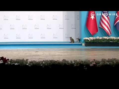 Thumbnail Stay Cats Crash G20 Summit