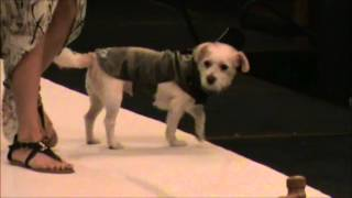 Dog Fashion Show movie -September 2015