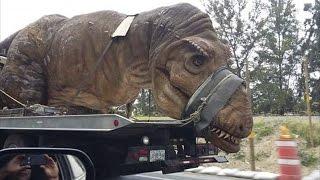 6 Criaturas Prehistóricas que Aún Podrían Vivir entre Nosotros | TOP