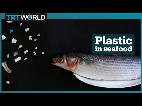 Microplastic waste in seafood