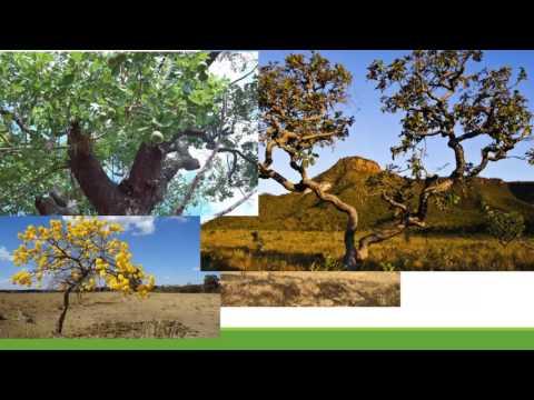 Geografia de Mato Grosso -  biomas