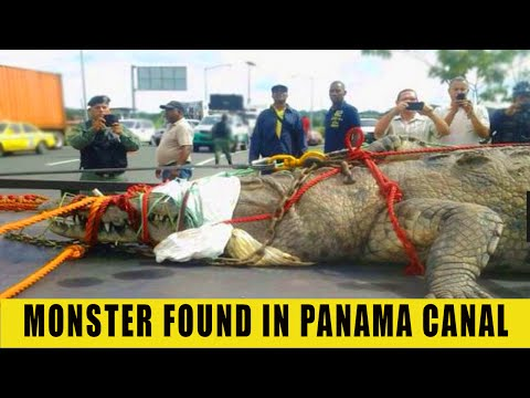 MONSTER FROM PANAMA CANAL EXPLAINED