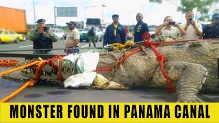 MONSTER FROM PANAMA CANAL EXPLAINED thumbnail