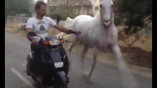 racking horse  rawal chal