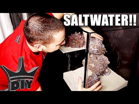 FINALLY! I set up the saltwater aquarium!!