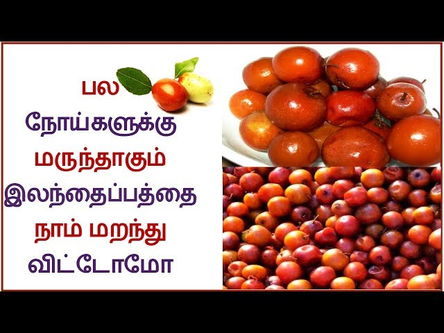 Amazing Benefits of Ber/ilanthai palam Indian Jujube fruit In Tamil