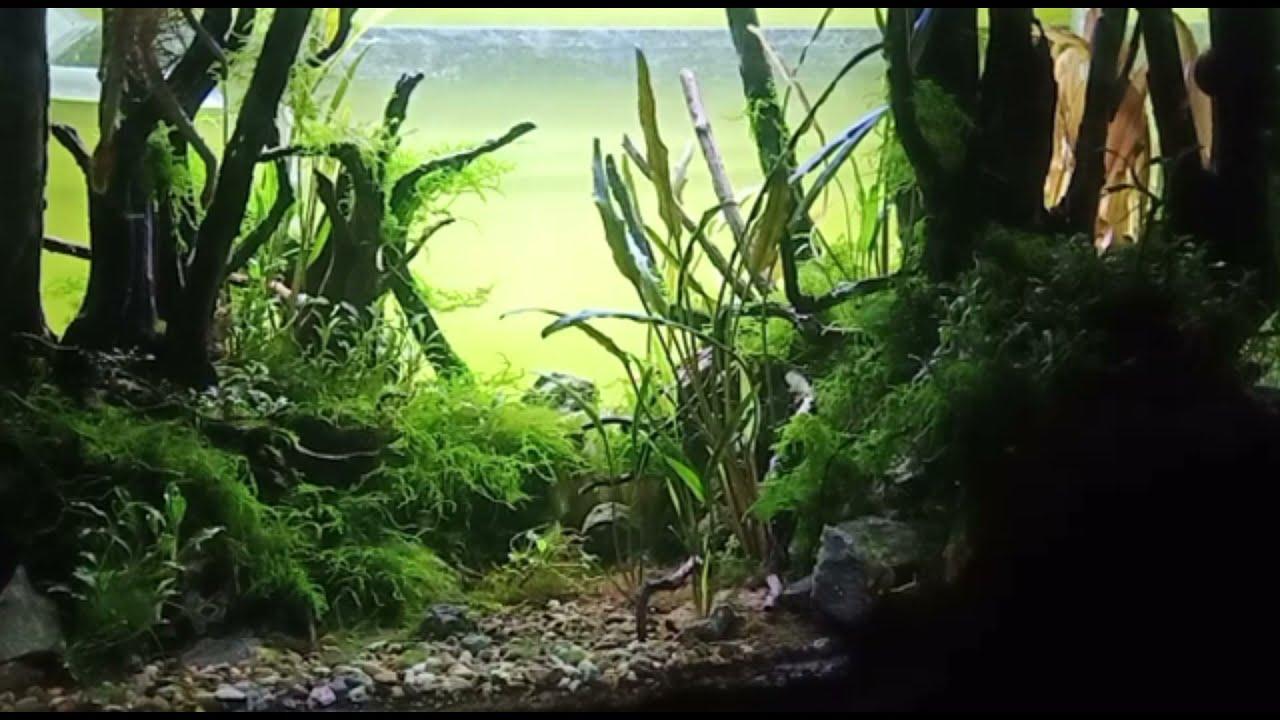Aquarium untuk relexsasi menenangkan pikiran