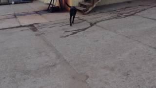 Сосиска и собака