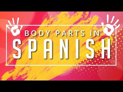 [Learn Spanish] Human Body Parts In Spanish   Basic Spanish Vocabulary
