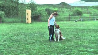 How To Teach A Dog To Walk Backwards.