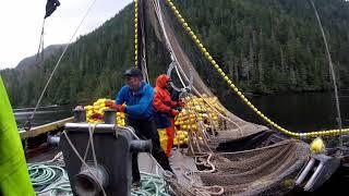Alaska salmon seining