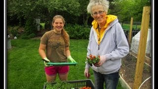 Garden Apprentice - Wisconsin Garden Video Blog 393