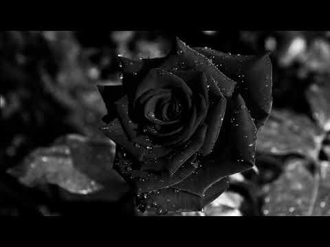 Neljä Ruusua - B&C (Mustia Ruusuja)