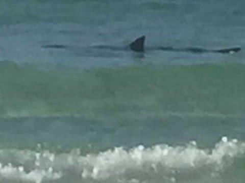 Shark sighting clears Anna Maria Island beach