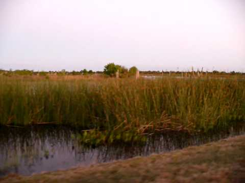 Viera Wetlands, FL.  It's so loud with all the birds.