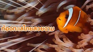 ท้องทะเลไทยสวยงาม - [ MV ]