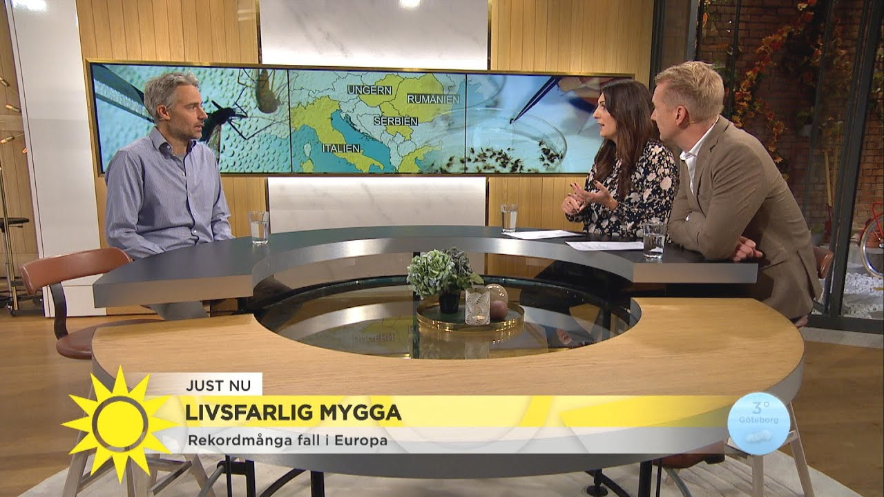Dödlig tropisk sjukdom sprids via myggor till Europa - Nyhetsmorgon (TV4)