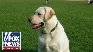 PETA objects to bill to make Ohio's state dog the Labrador