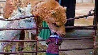 מה שקרה לילדה הזאת בגן חיות לא ישכח לעולם..