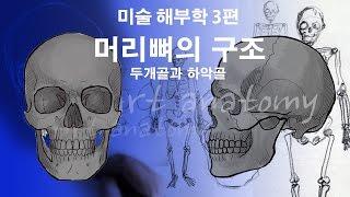 [Eng]수경쌤의 미술해부학 3화 - 머리뼈의 구조(두…