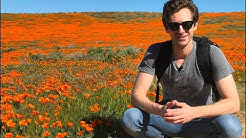 Let's Visit the Antelope Valley Poppy Reserve to See the Poppies in Bloom