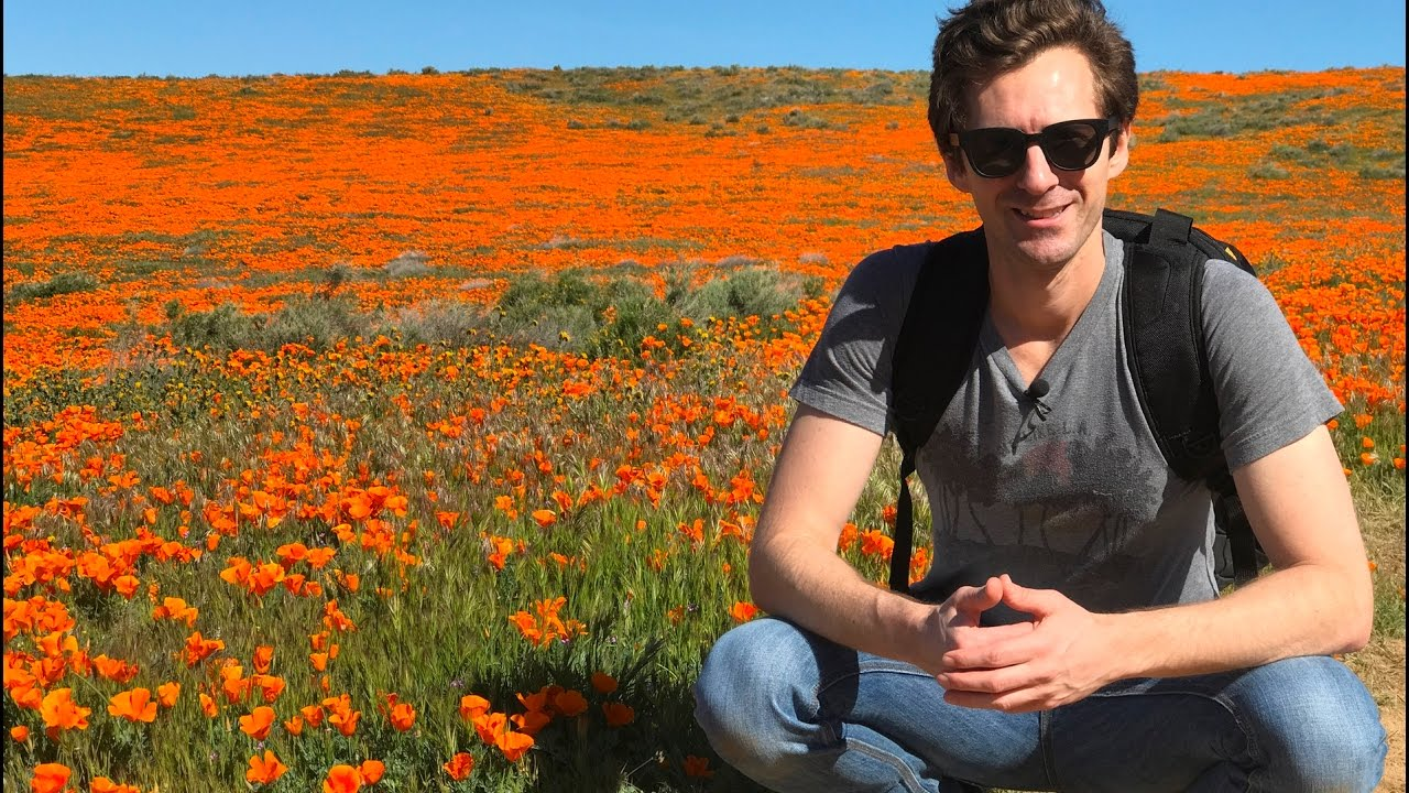 Lets Visit The Antelope Valley Poppy Reserve To See The Poppies In