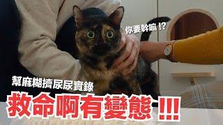 幫麻糊尿尿實錄-癱貓上廁所-像打仗一樣啊-好味貓日常-ep58