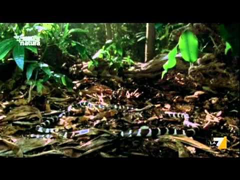 MISSIONE NATURA 03/07/2011 – A tavola con i serpenti