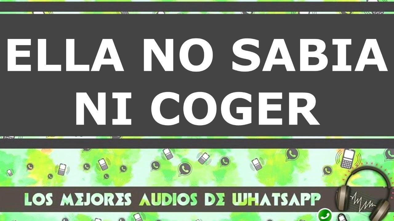 NO SABIA NI COGER- Los mejores audios de whatsapp