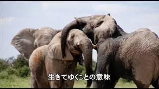混声三部合唱 いのちの歌 作司 Miyabi 作曲 村松崇継 編曲 富澤裕 歌い...