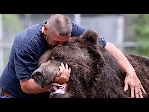 Медведи соскучились по человеку