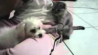 超欠揍的貓
