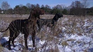 Psy w łowiectwie od zarania dziejów...