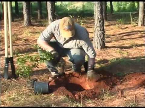 Backyard Wildlife Management - The Management Advantage