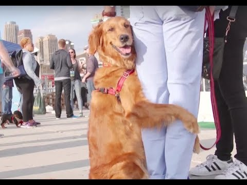 We're BARK, The Company Dedicated to Making Dogs as Happy as They Make Us