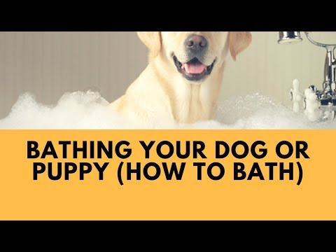 Bathing Your Dog or Puppy (How to bath)