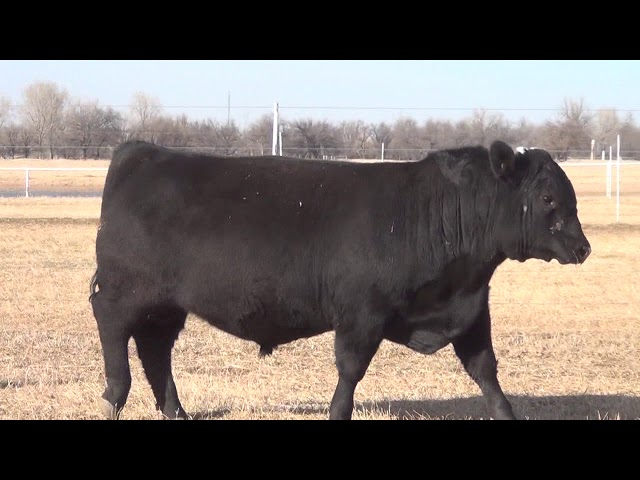 Express Ranches Lot 27