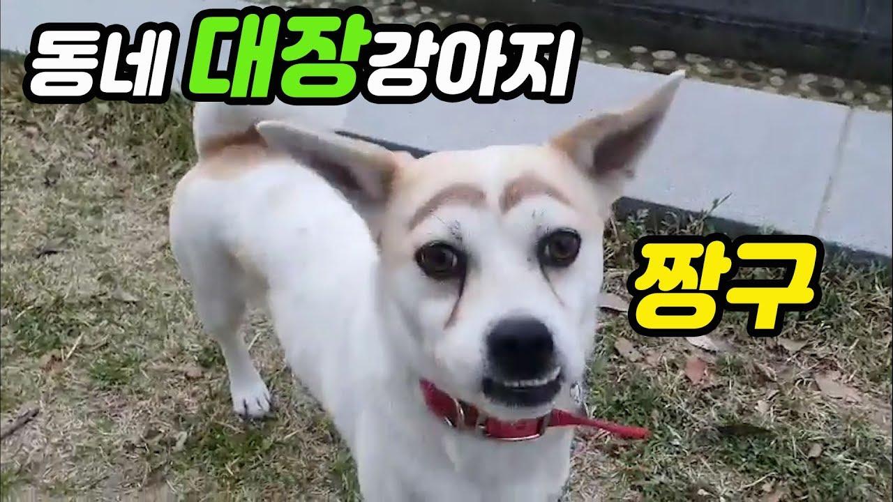 | 강아지 |★| 귀여운강아지 |♡[ 콩지 ]- 동네대장강아지 짱구 | 포메 | pomeranian |포메라니안