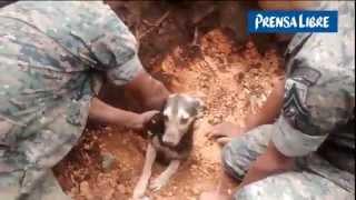 Perro logró sobrevivir después de 18 horas enterrado por alud
