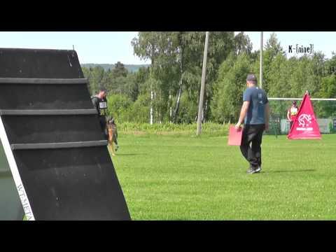 Gamle Bry`n Av Staalhjerte  - B @ Norwegian Masters 2013