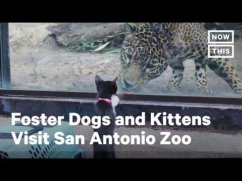Adorable Foster Animals Visit San Antonio Zoo   NowThis