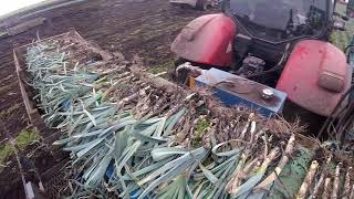 Organic Leek Harvesting With The Asa Lift Po-335 And Case Puma Cvx